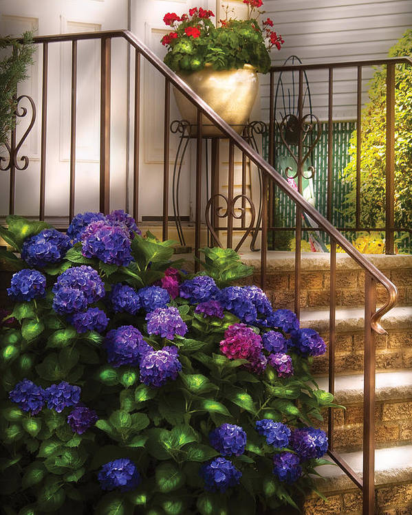 Savad Poster featuring the photograph Flower - Hydrangea - Hydrangea And Geraniums by Mike Savad