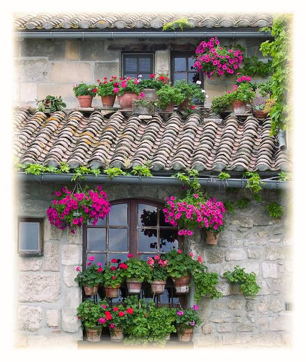 Arches Poster featuring the photograph Flower Pots In Windows In Arles by Carson Ganci