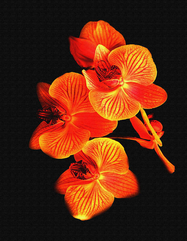 Flower Poster featuring the photograph Flower by Ralph Perdomo