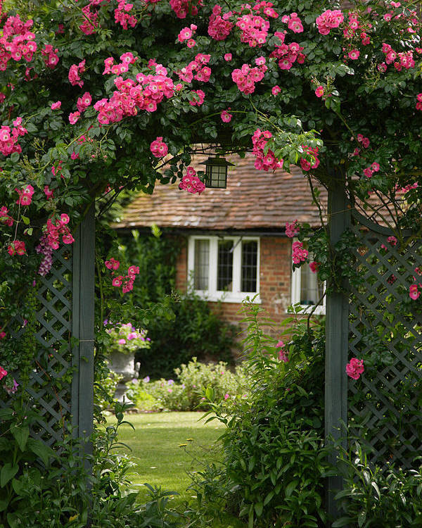 England Poster featuring the photograph Flower Trellis England by Michael Hudson