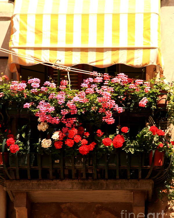Flowers Poster featuring the photograph Flowers And Awning In Venice by Michael Henderson