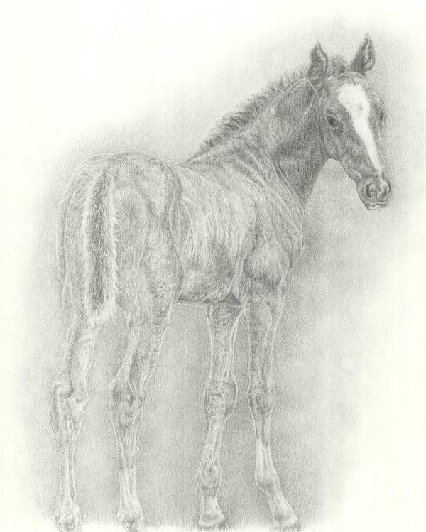 Foal Poster featuring the drawing Spring Foal by Jennifer Nilsson
