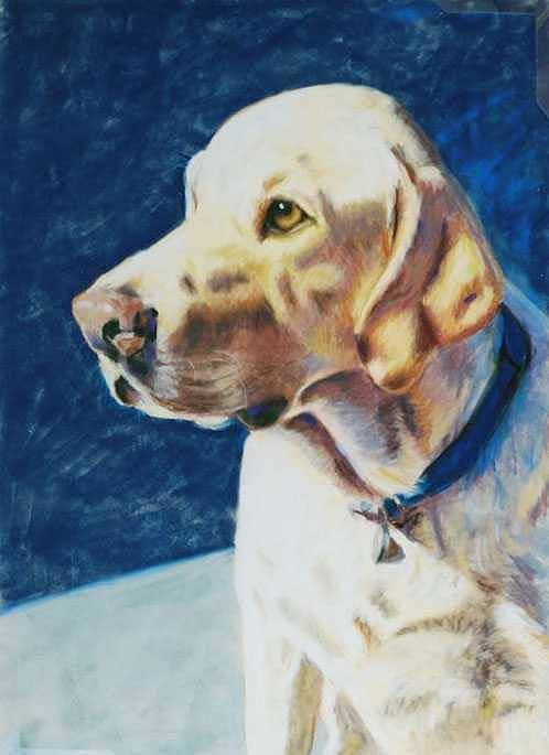 Yellow Lab Poster featuring the painting Focused by Billie Colson