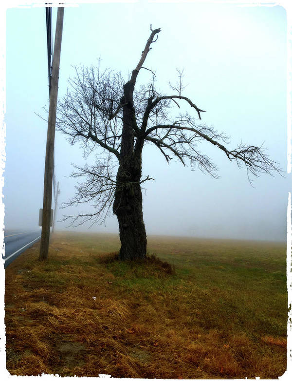 Poster featuring the photograph Fog by Cathy Peterson