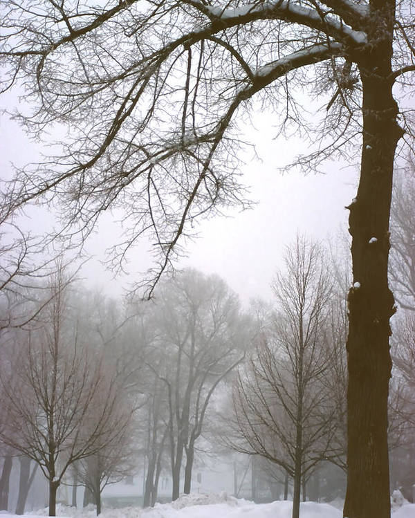 Fog Poster featuring the photograph Foggy Morning Landscape 10 by Steve Ohlsen