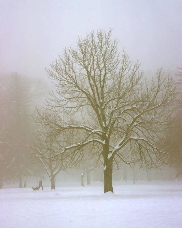 Nature Poster featuring the photograph Foggy Morning Landscape 7 by Steve Ohlsen