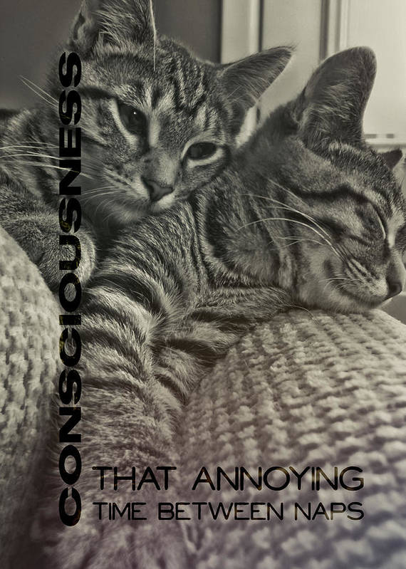 Cat Poster featuring the photograph Forty Winks Quote by JAMART Photography