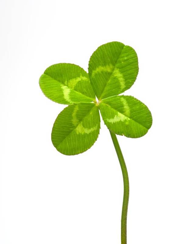 Four-leaf Clover Poster featuring the photograph Four-leaf Clover by David Nunuk