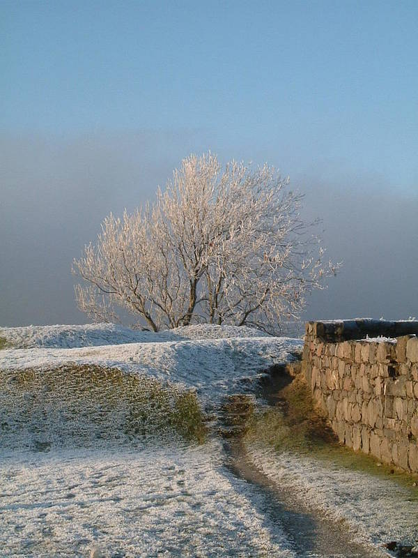 Landscape Poster featuring the photograph Freezing Tree by Laurence Northcote