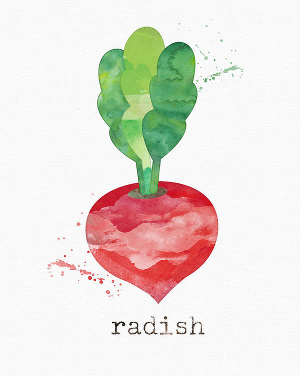 Radish Poster featuring the painting Fresh Radish by Linda Woods