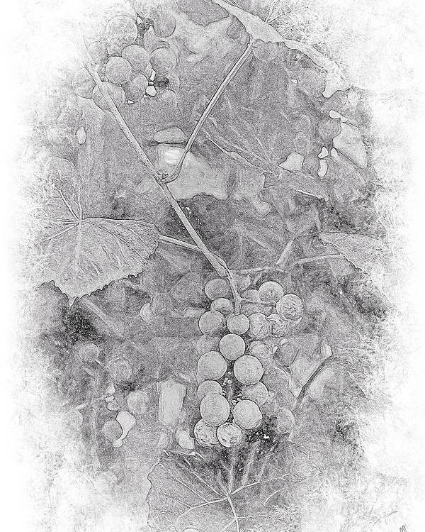 Grapes Poster featuring the photograph Frosted Grapes Vignette by Theresa Campbell