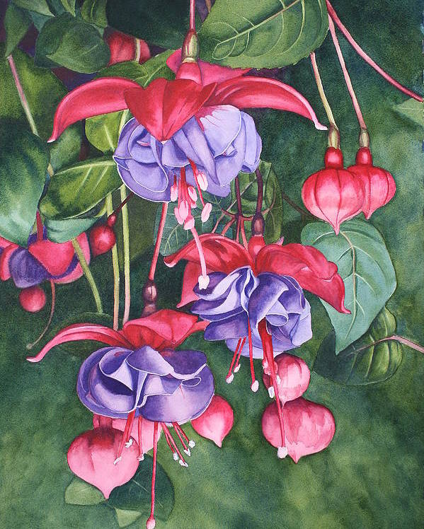 Flower Poster featuring the painting Fuchsia Trio by Tina Sander