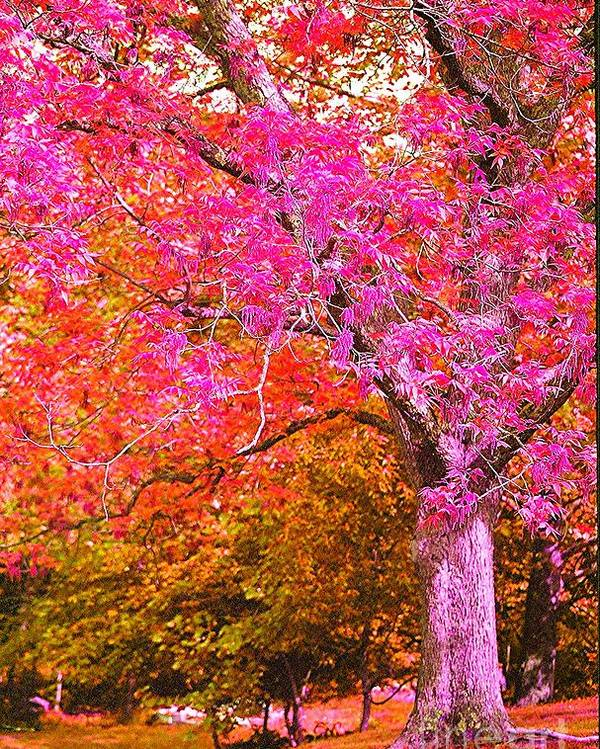 Fuschia Poster featuring the photograph Fuschia Tree by Nadine Rippelmeyer