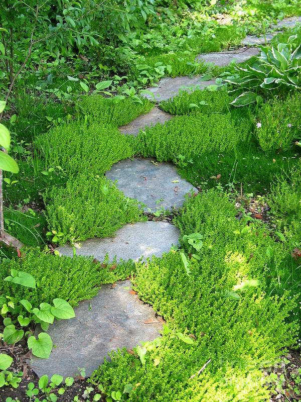 Path Poster featuring the photograph Garden Path by Idaho Scenic Images Linda Lantzy