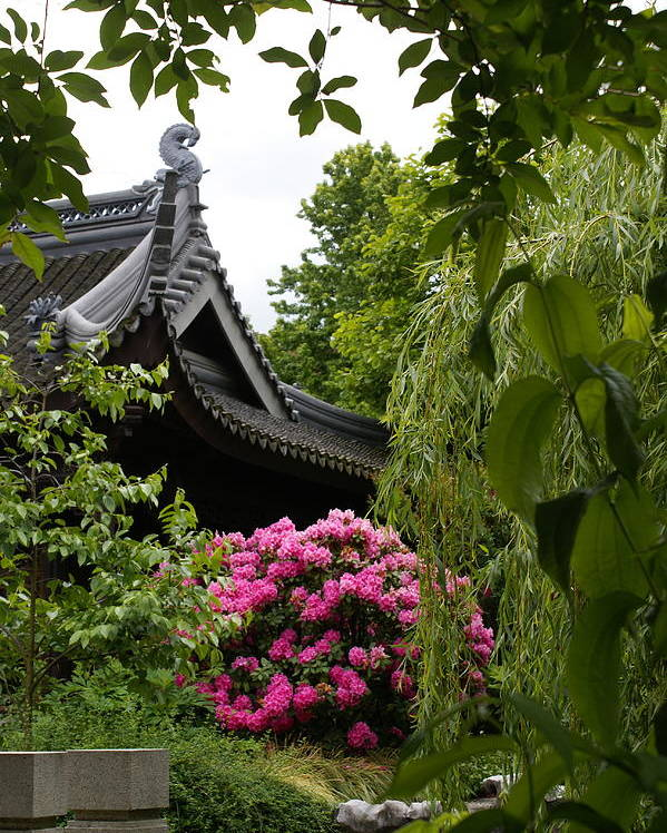 Chinese Garden Poster featuring the photograph Garden View by Sonja Anderson