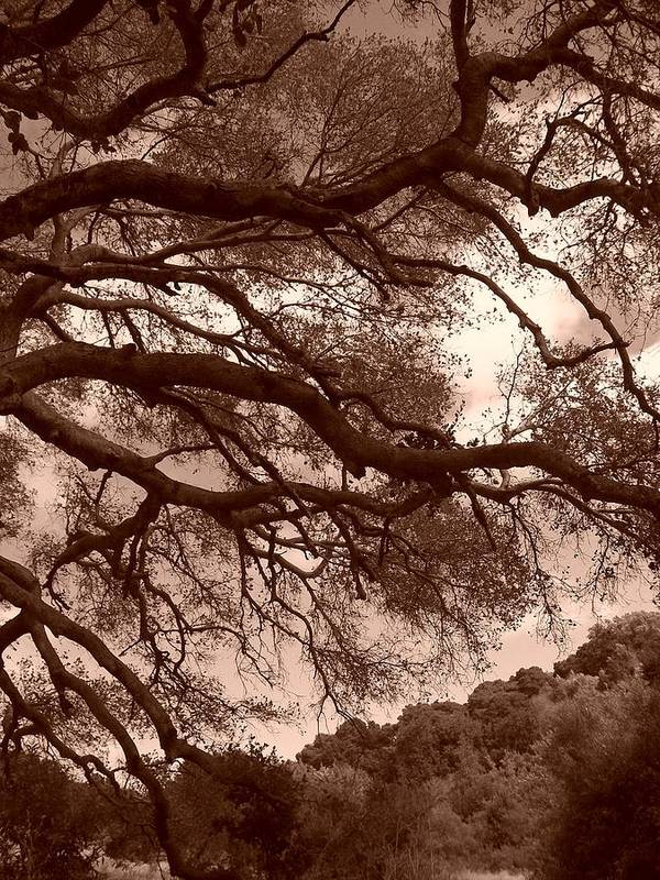 Sepia Poster featuring the photograph Garin Park Tree 2 by Gwendolyn Barnhart