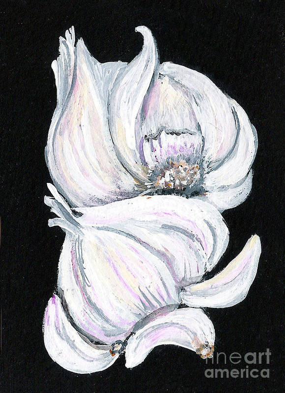 Garlic Poster featuring the painting Garlic 2 by Elaine Hodges