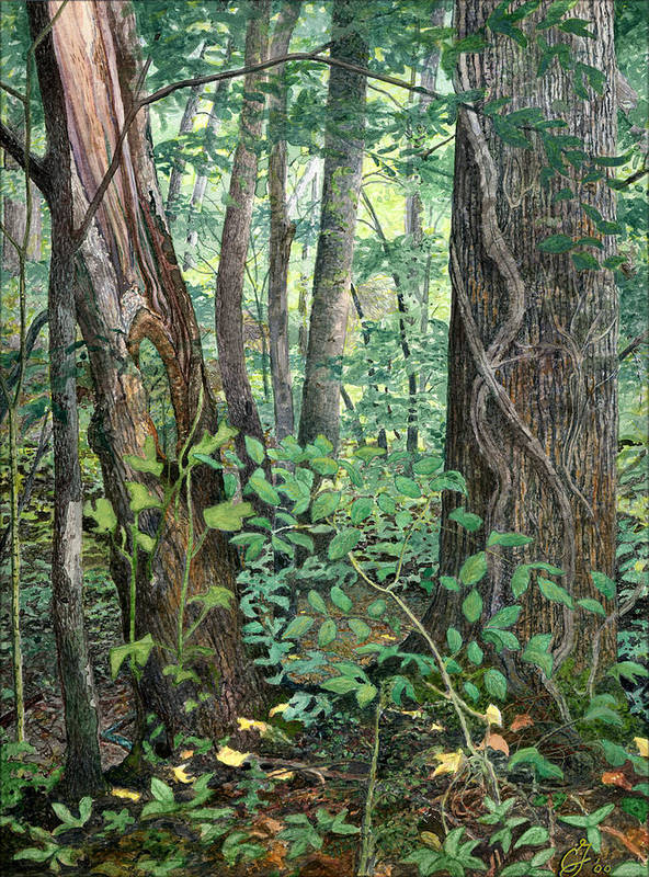Forest Poster featuring the painting Generations by Craig Gallaway