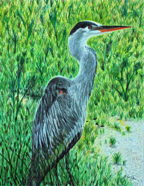 Blue Heron Poster featuring the drawing George - The Blue Heron by Tina Storey