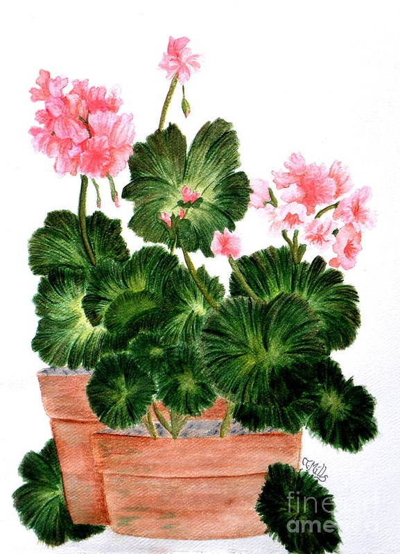 Geraniums Poster featuring the painting Geraniums In Clay Pots by Terri Mills