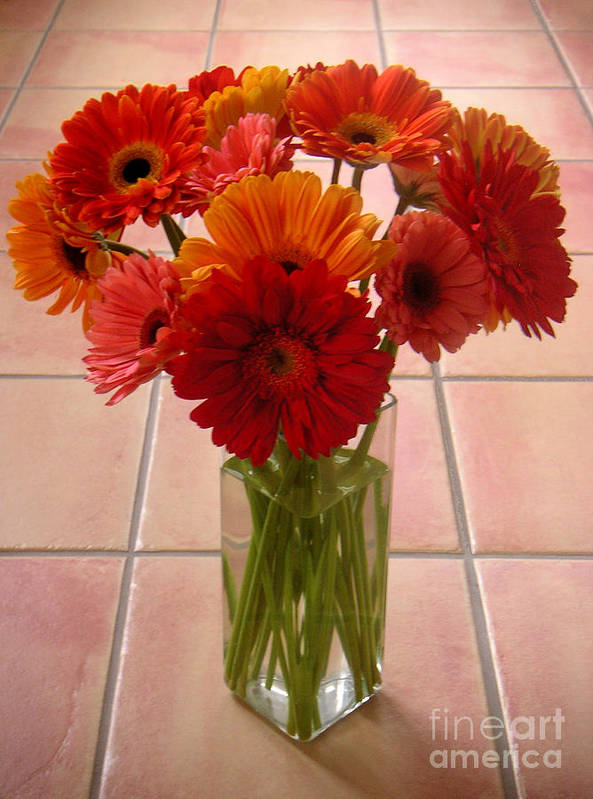 Nature Poster featuring the photograph Gerbera Daisies - On Tile by Lucyna A M Green