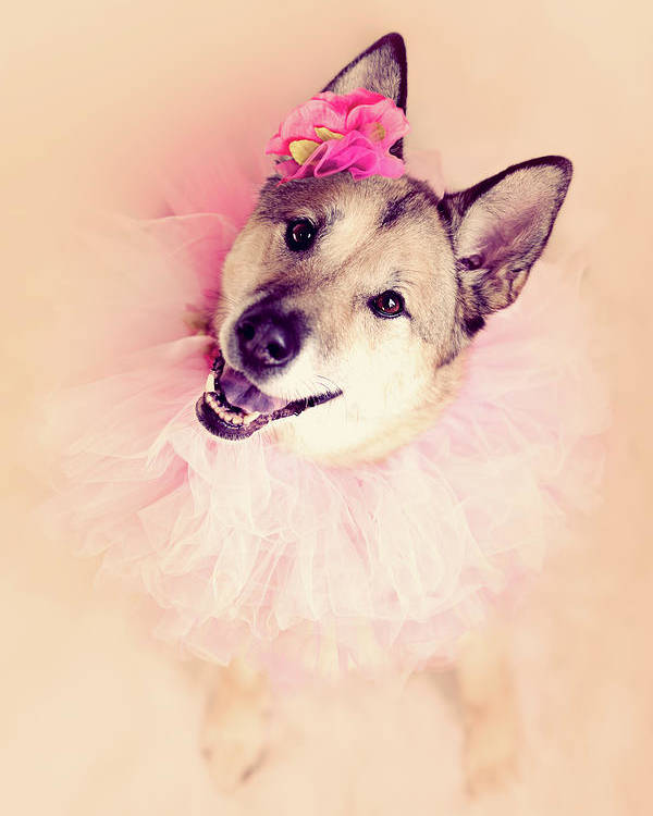Vertical Poster featuring the photograph German Shepherd Mix Dog Dressed As Ballerina by R. Nelson