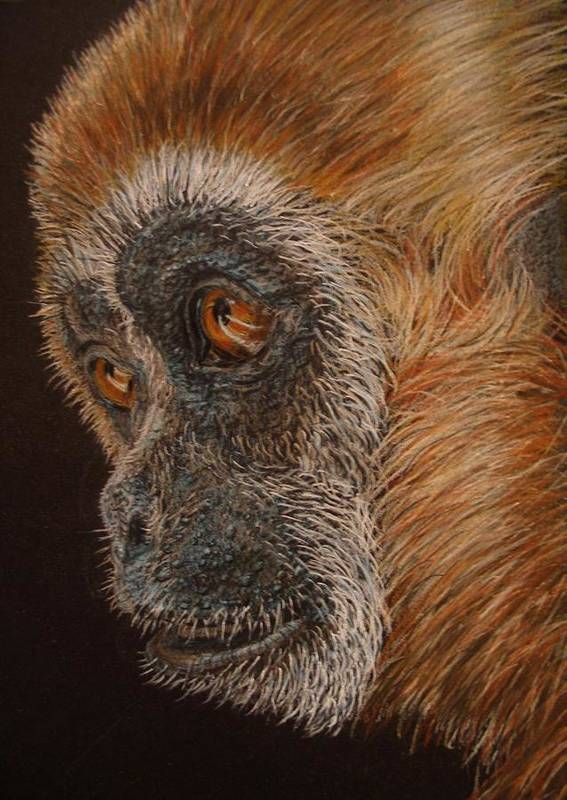 Animals Poster featuring the drawing Gibbon by Karen Ilari