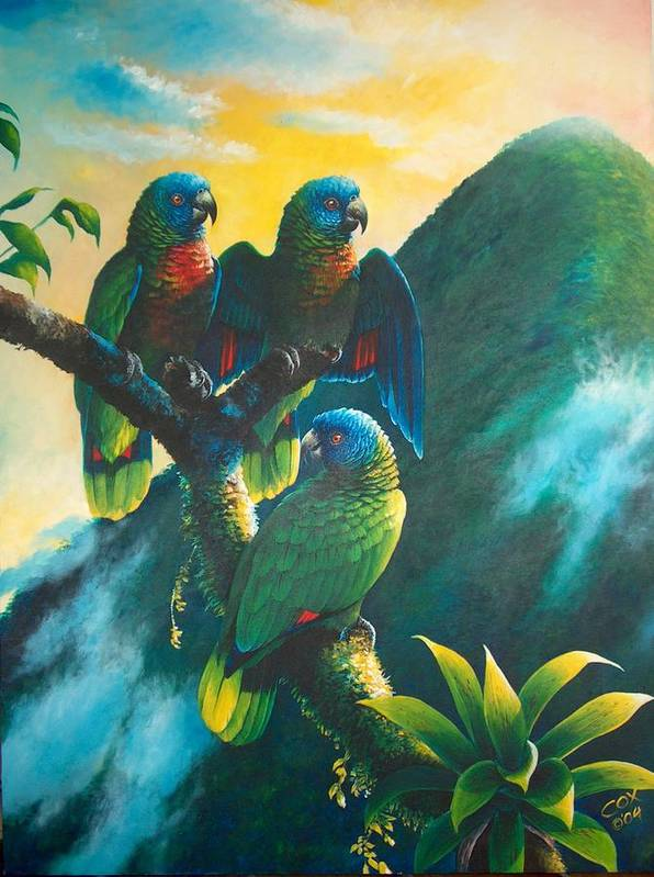 Chris Cox Poster featuring the painting Gimie Dawn 1 - St. Lucia Parrots by Christopher Cox