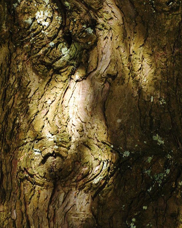 Tree Poster featuring the photograph Gnarly BC Tree by Richard Henne