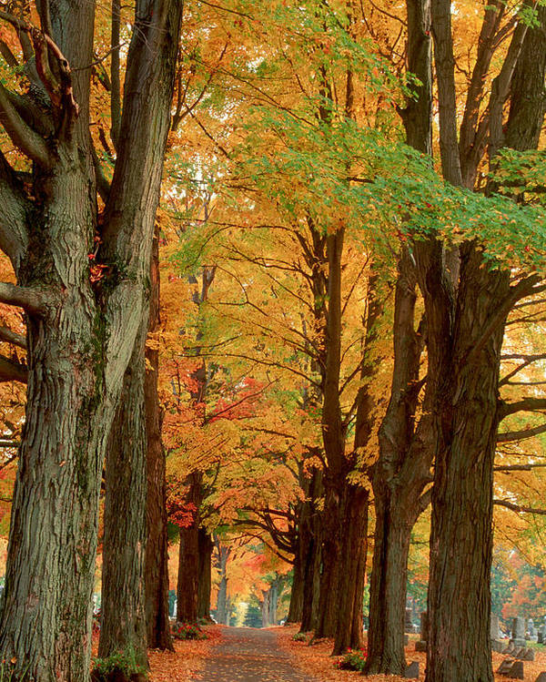 Fall Poster featuring the photograph Golden Avenue by Raju Alagawadi
