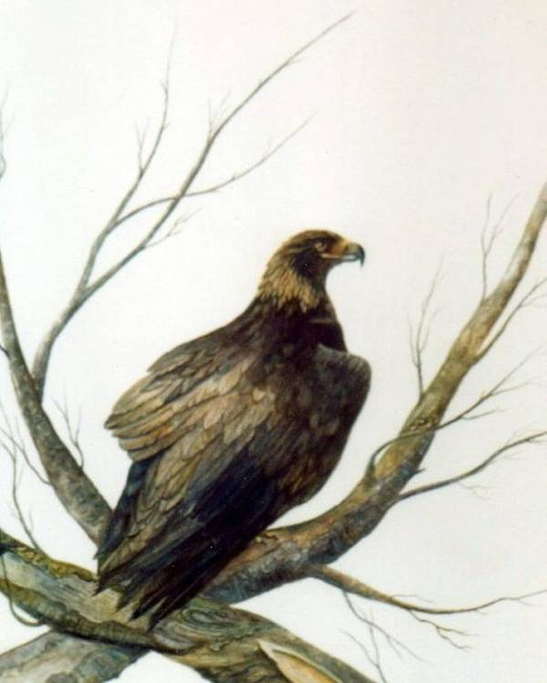 Eagle Poster featuring the painting Golden Eagle by Ben Kiger