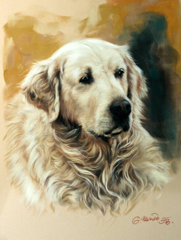 Labrador Poster featuring the drawing Golden Retriever by Gerard Mineo