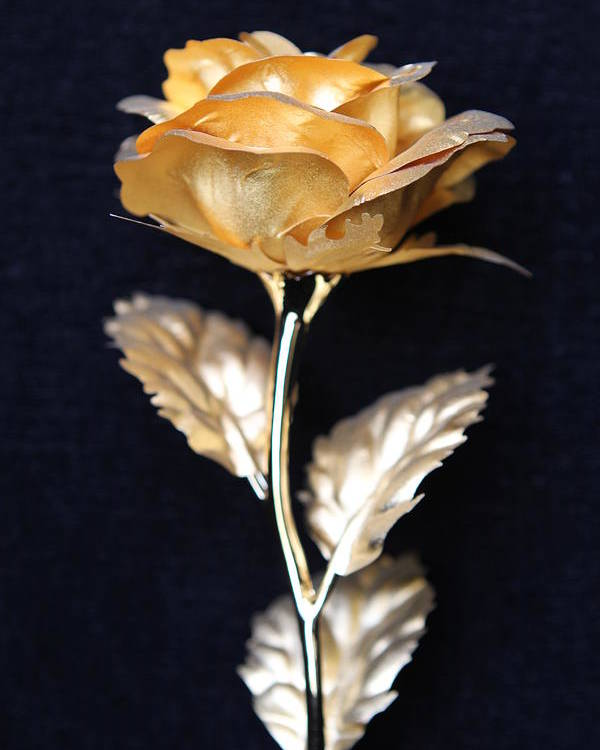Golden Rose Poster featuring the photograph Golden Rose 1 by Sladjana Lazarevic
