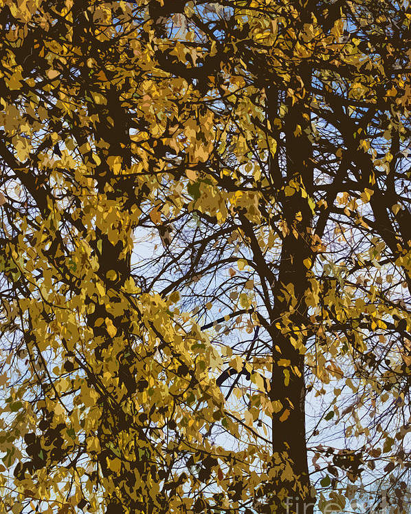 Autumn Poster featuring the photograph Golden Tree 2 by Carol Lynch