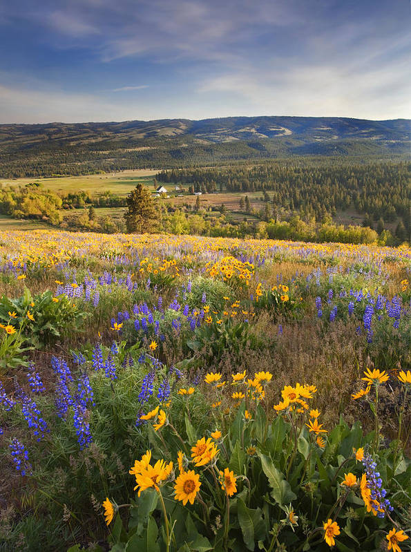 Wildflowers Poster featuring the photograph Golden Valley by Mike Dawson