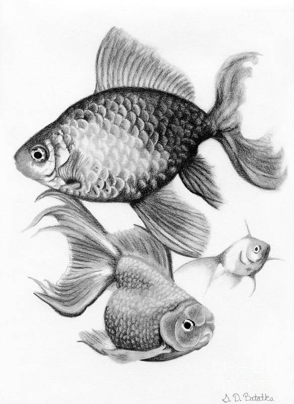 Goldfish Poster featuring the drawing Goldfish by Sarah Batalka
