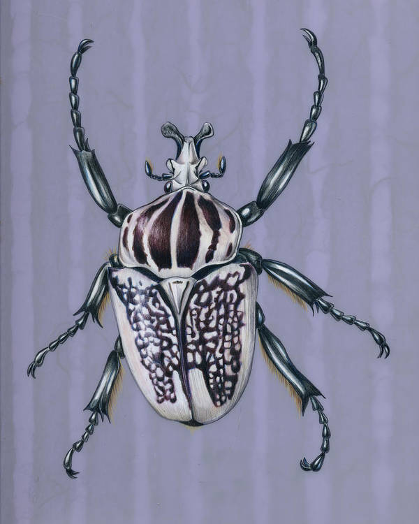 Beetles Poster featuring the painting Goliath Beetle by Mindy Lighthipe