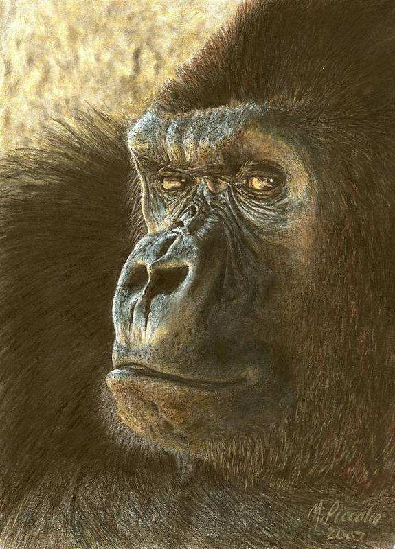 Gorilla Poster featuring the drawing Gorilla by Marlene Piccolin