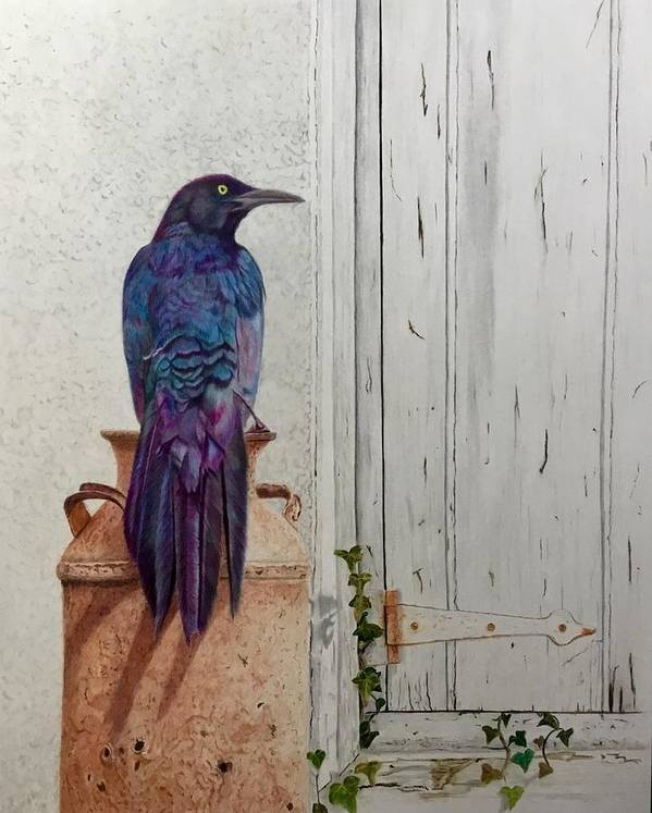 Grackle Poster featuring the drawing Grackle Greetings by Michelle McAdams