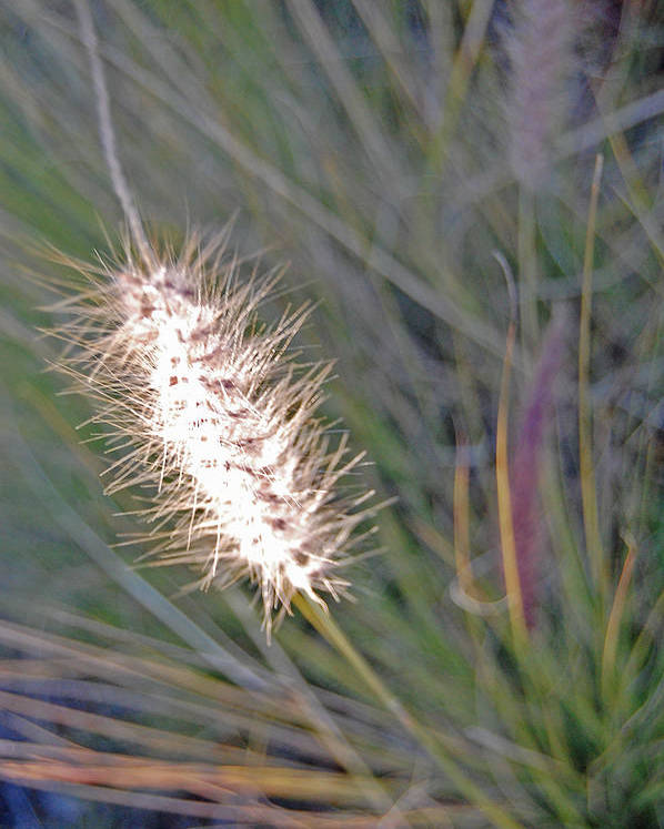 Grass Poster featuring the photograph Grass Light by Jean Booth