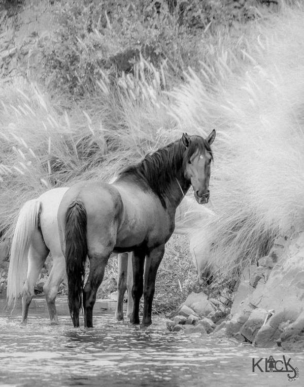 Wild Poster featuring the photograph Grazing by Sandy Klewicki