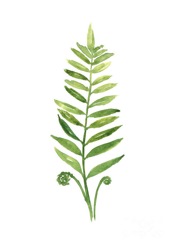 Fern Poster featuring the painting Green Fern Watercolor Art Print Painting by Joanna Szmerdt