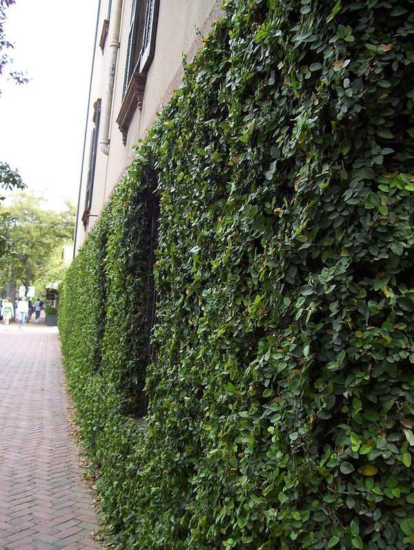 Beautiful Green Wall Poster featuring the photograph Green by Nereida Slesarchik Cedeno Wilcoxon