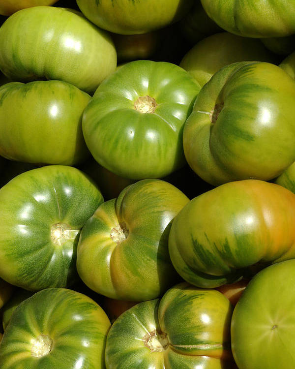 Green Poster featuring the photograph Green Tomatoes by Frank Tschakert