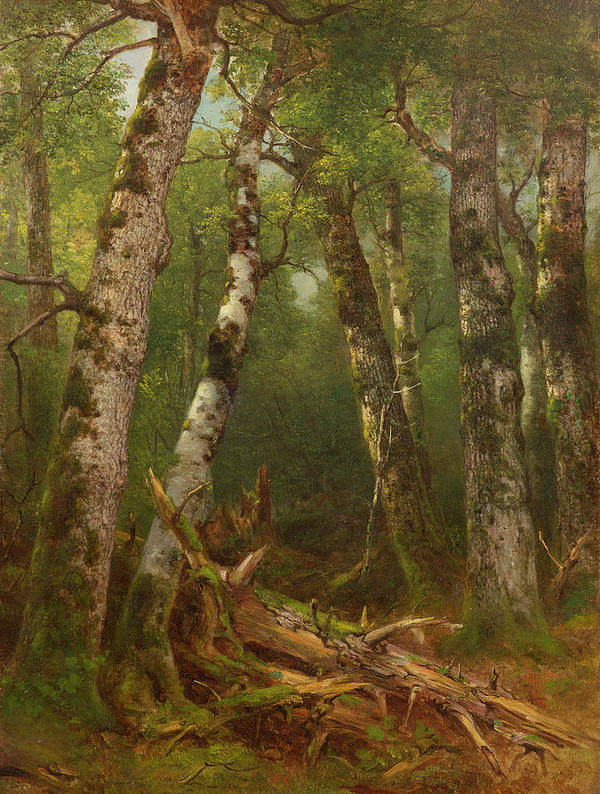 Woodland; Forest; Tree; Wood; Fallen; Birch; Romanticist; Romantic; Hudson River School; Bouleau; Bouleaux; Group Of Trees Poster featuring the painting Group Of Trees by Asher Brown Durand