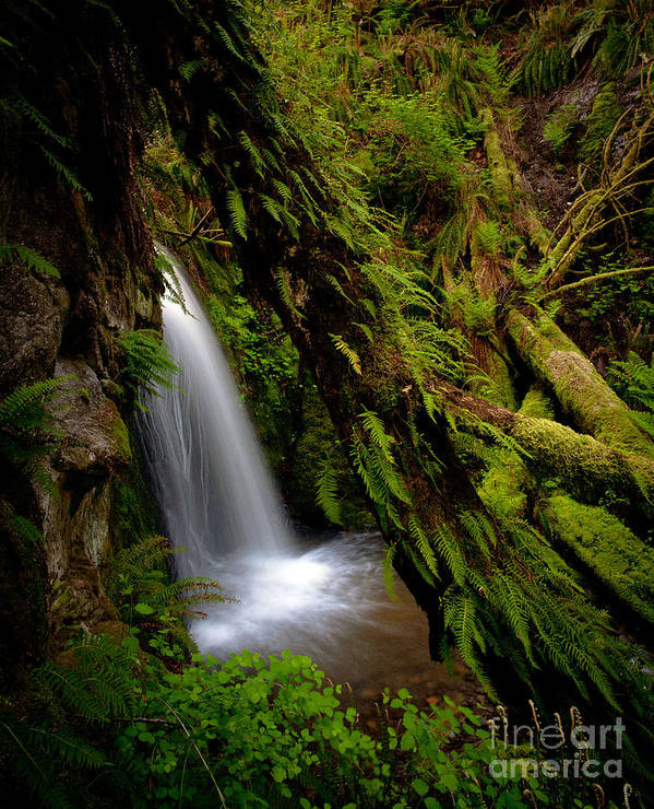 Cascades Poster featuring the photograph Grove Of Life by Mike Reid