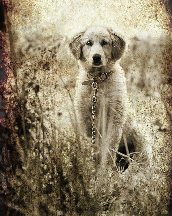Poster featuring the photograph Grunge Puppy by Meirion Matthias