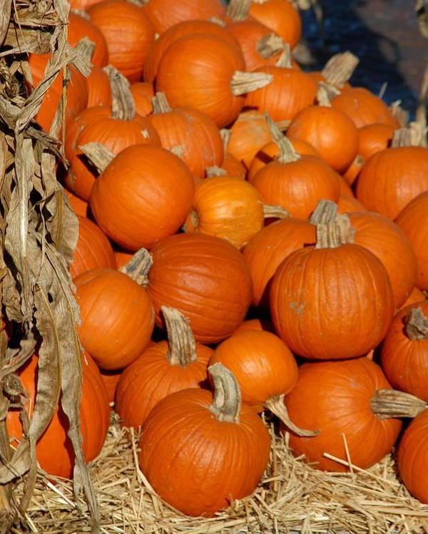 Pumpkins Poster featuring the photograph Halloween 69 by Joyce StJames