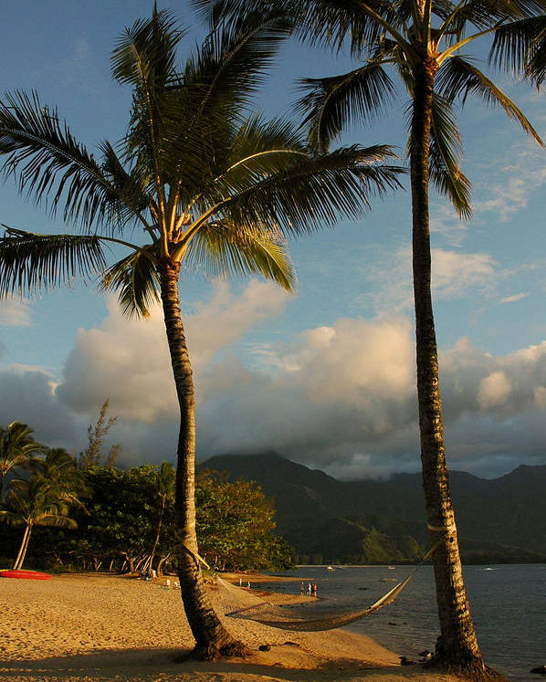 Hawaii Poster featuring the photograph Hammock Between Palms by Stephen Vecchiotti