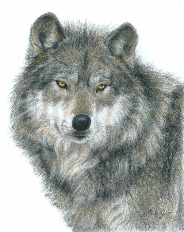 Wolf Poster featuring the drawing Haunting Eyes by Carla Kurt
